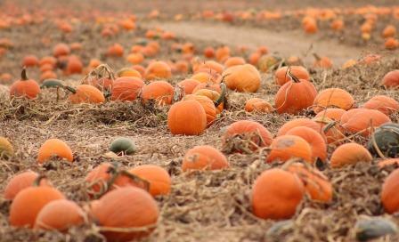 pumpkins-1131085_960_720